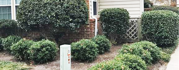 Bushes in front of property located at 704 Nottoway River Court Unit F, Chesapeake, VA 23320