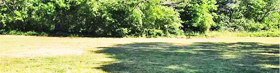 Yard of property located at 27356 Cheapside Road, Cape Charles, Virginia 23310