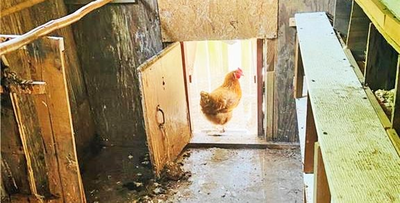 Chicken coop located at 32156 S Main Street, Boykins, VA 23827