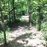 17.2ac Comans Well Road, Stony Creek, VA 23882